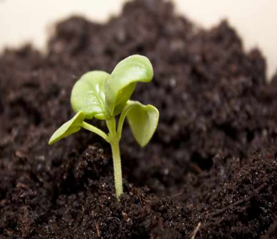 Biología Aplicada al Agro